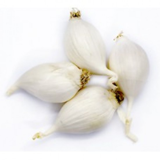 Deshi Single Shell Garlic 500 GM. 175 TK